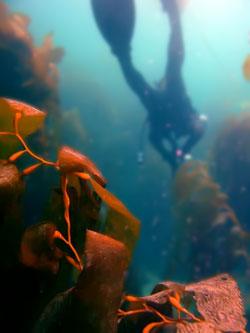 Diving Malaga