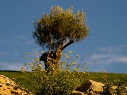 Marbella to Estepona route